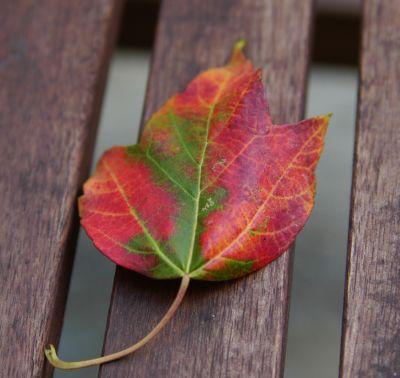 First_leaf_2