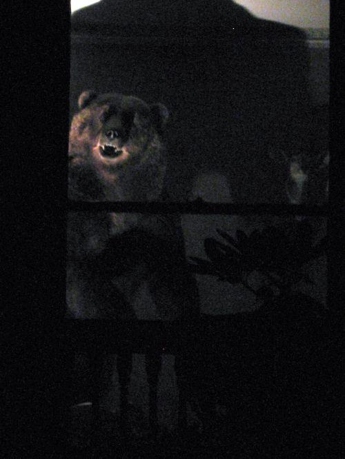 Bear_9