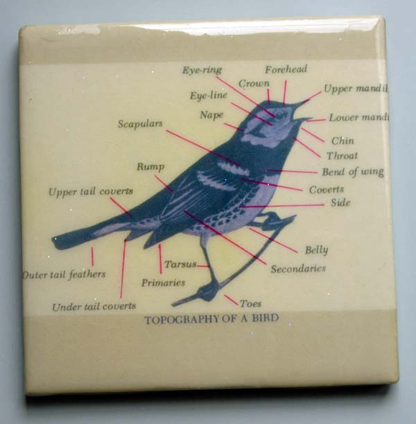 Bird_topography_1